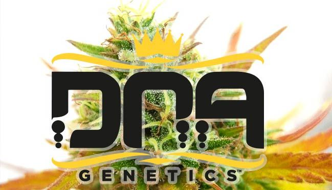 DNA Genetics: La genética y su papel en los mercados de cannabis legal