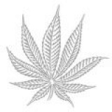 Hash Marihuana & Hemp Museum--España
